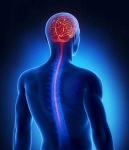 brain-spine